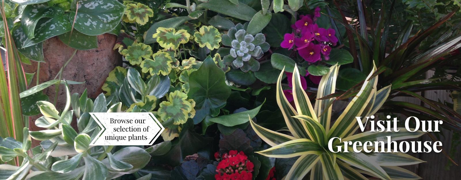 slide-greenhouse