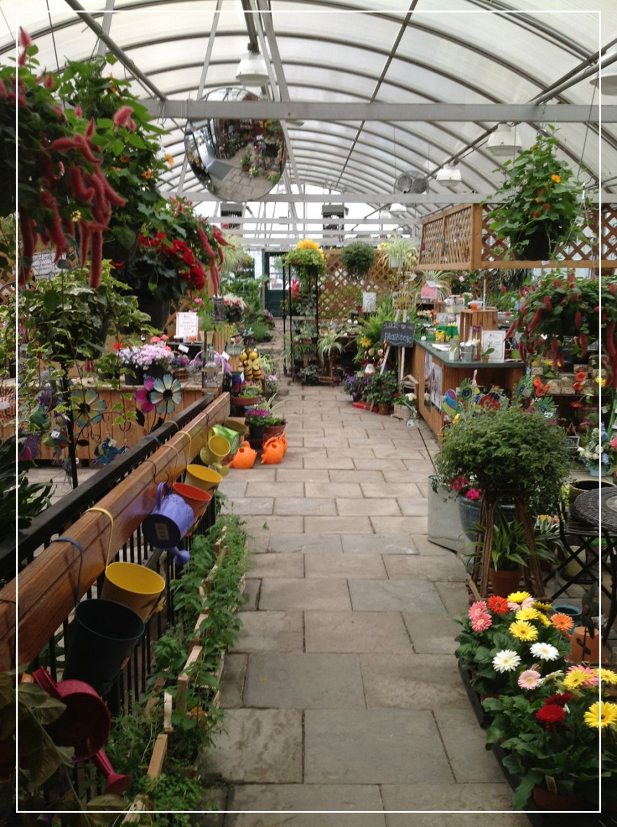 greenhouse with large rows of plants and flowers