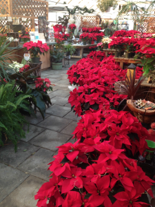 Winter Greenhouse 7