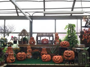 Fall Greenhouse 7