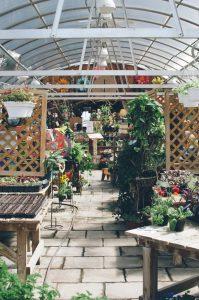 Spring Greenhouse 11