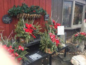 Winter Greenhouse 3