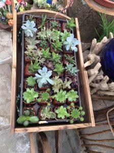 Mini Garden Gallery 20