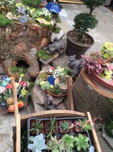 Mini Gardens 21